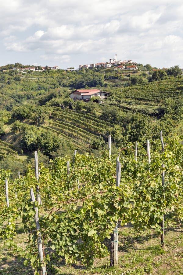 Paisagem mediterrânea rural pitoresca com vinhedos foto de stock royalty free