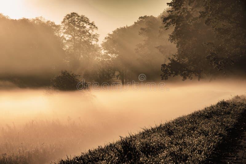 Paisagem misteriosa da névoa grossa no fundo da árvore imagem de stock