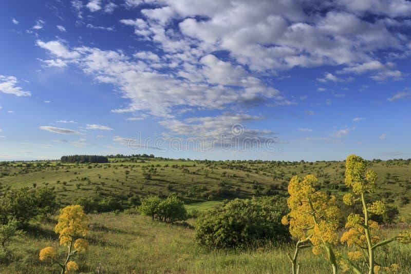 Paisagem montanhosa com o imaturo do campo de milho dominado por nuvens: Alta Murgia National Park, Apulia It?lia imagens de stock
