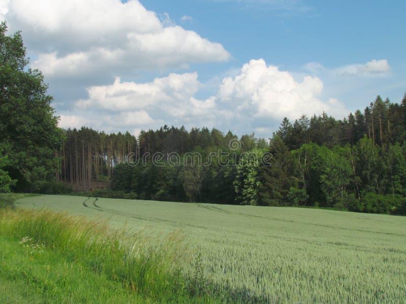 Paisagem montanhosa do campo do verão com o prado verde esmeralda, os montes arborizados no horizonte e as nuvens dramáticas no c foto de stock