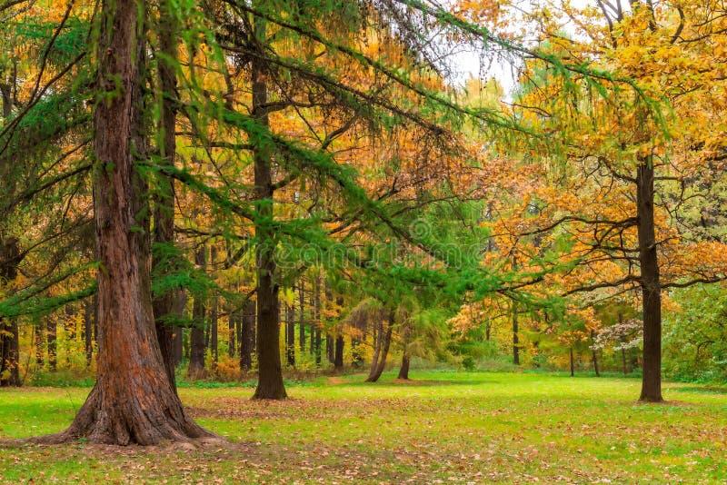 Paisagem muito bonita do outono da floresta foto de stock