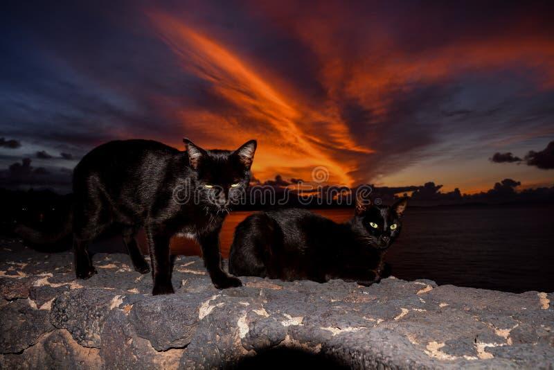 Paisagem na Espanha vulcânica tropical das Ilhas Canárias fotografia de stock royalty free
