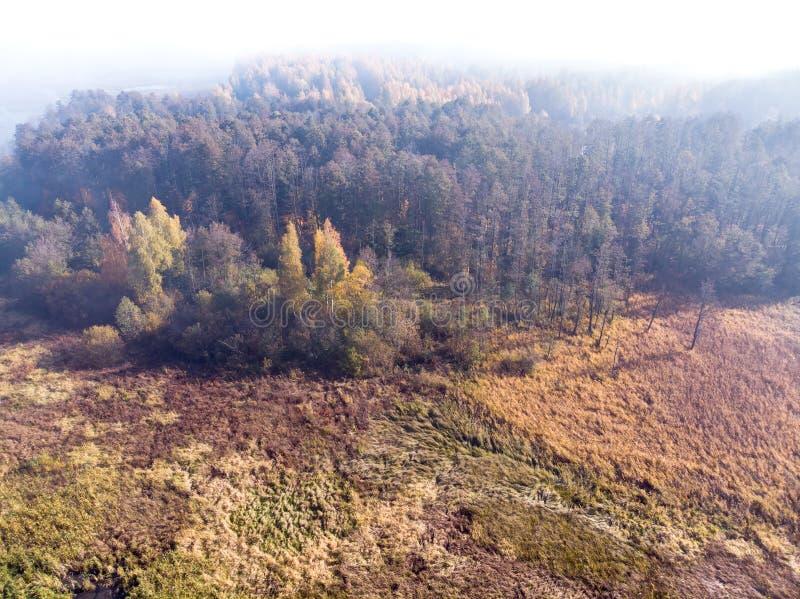 Paisagem natural com a floresta outonal coberta na névoa fotos de stock