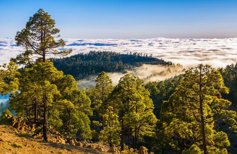 Paisagem natural surpreendente de montanhas nevoentas Floresta natural Lo imagem de stock