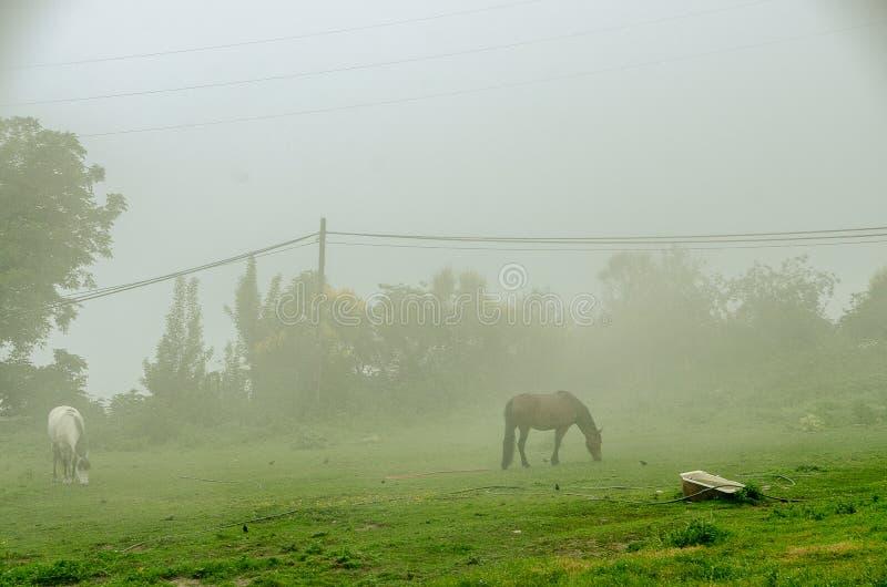 Paisagem nebulosa com cavalos imagem de stock royalty free