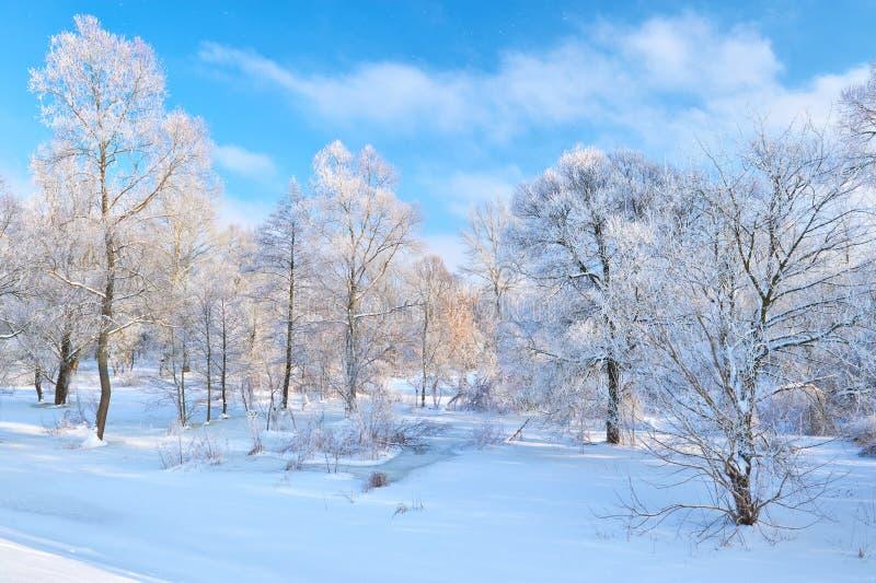 Paisagem nevado bonita pelo Narew River Valley. fotografia de stock royalty free