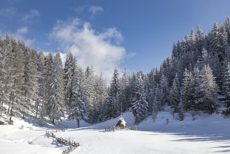 Paisagem nevado do inverno com monte de feno imagem de stock royalty free