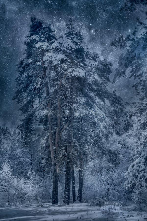 Paisagem nevado do inverno no dia ensolarado fotos de stock royalty free