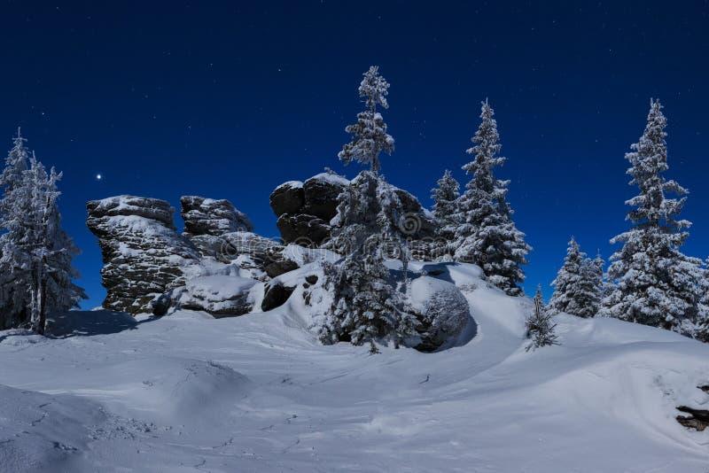 Paisagem nevado do Natal na noite Floresta do inverno na neve Lua cheia e c?u estrelado imagem de stock
