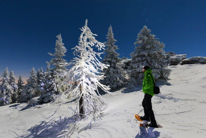 Paisagem nevado do Natal Noite do luar Floresta do inverno na neve Lua cheia e c?u estrelado fotografia de stock
