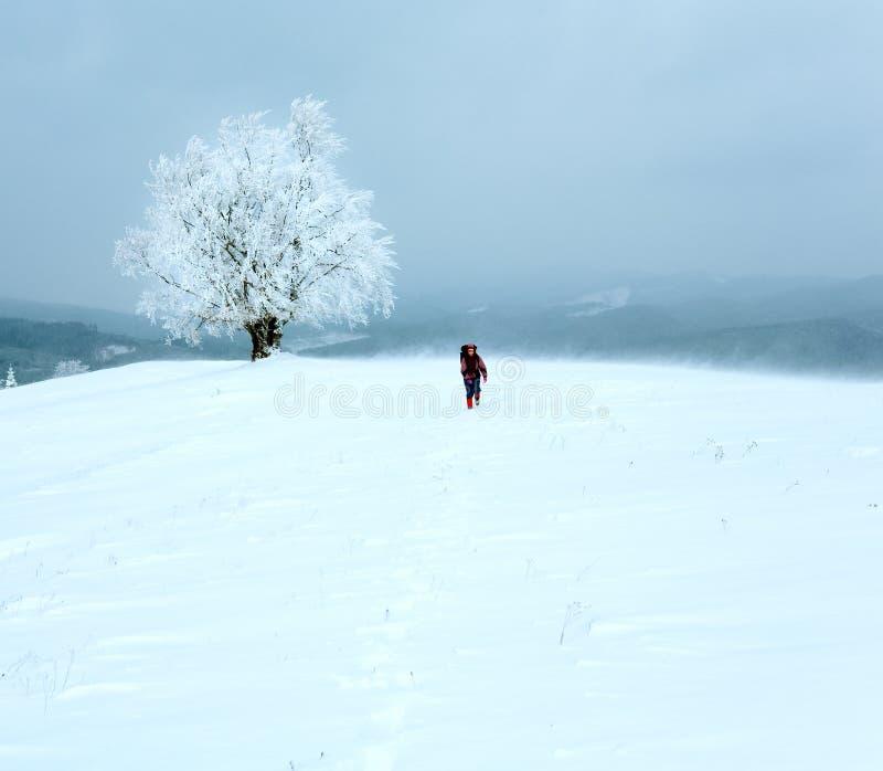 Paisagem nevado inclemente do inverno imagens de stock royalty free