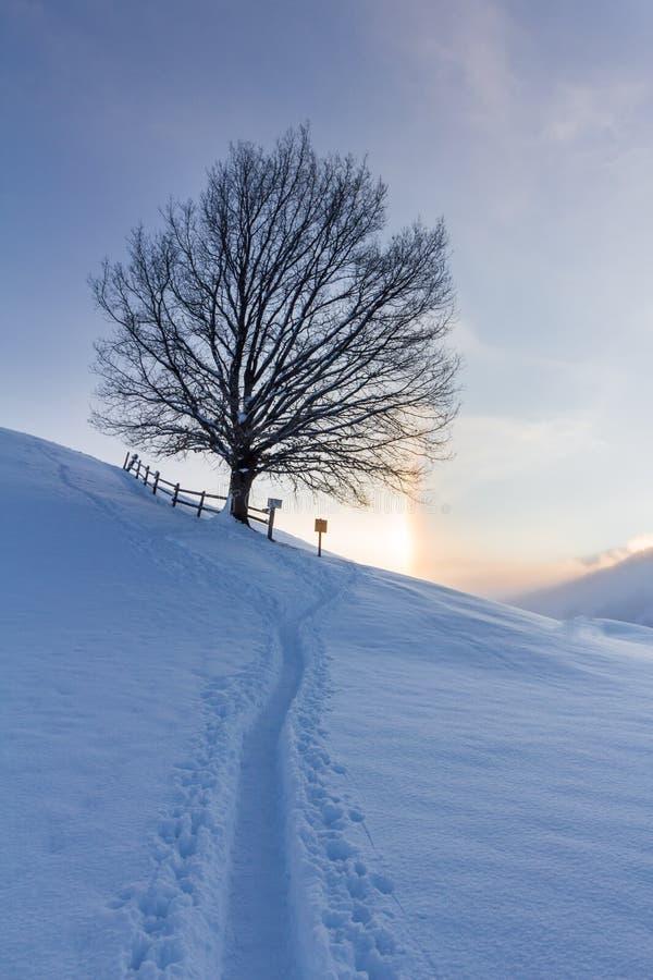 Paisagem nevado nos cumes, nascer do sol do inverno com fenômenos do halo imagem de stock royalty free