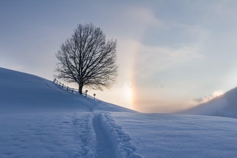 Paisagem nevado nos cumes, nascer do sol do inverno com fenômenos do halo imagem de stock