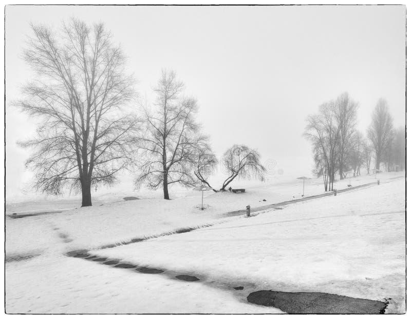 Paisagem nevoenta, árvores sob a neve foto de stock royalty free