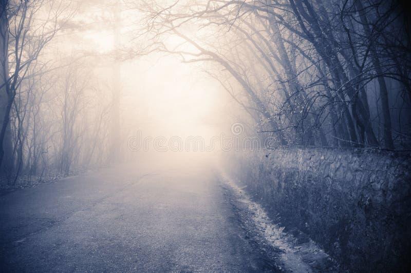paisagem nevoenta fotos de stock