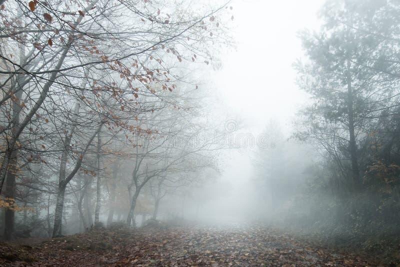 paisagem nevoenta imagem de stock