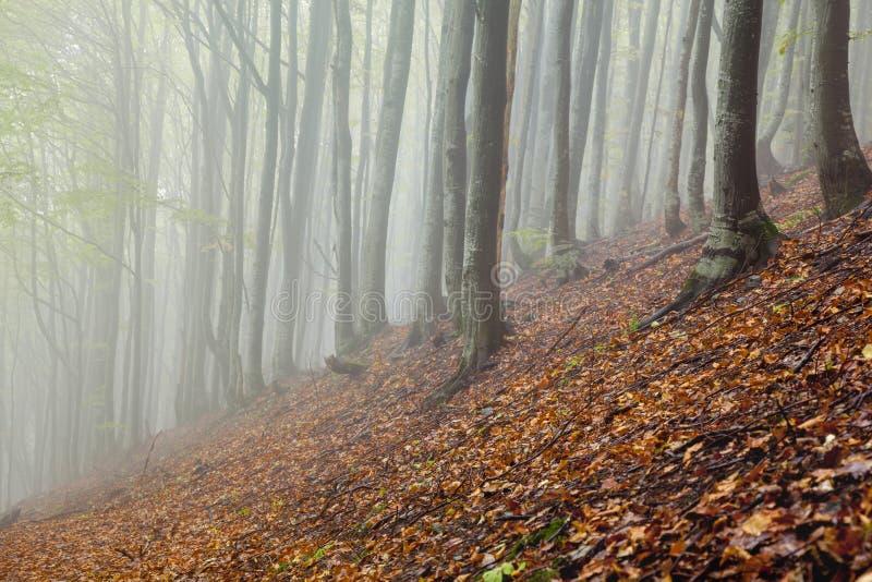 Paisagem nevoenta da floresta da manhã místico fotos de stock