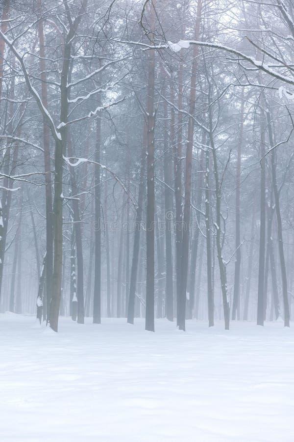 Paisagem nevoenta da floresta do inverno imagem de stock royalty free