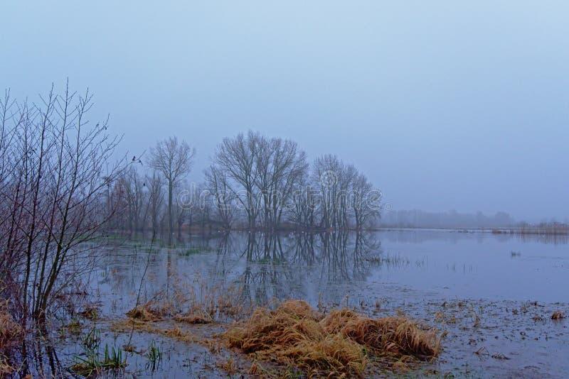 Paisagem nevoenta da região pantanosa com árvores desencapadas imagem de stock