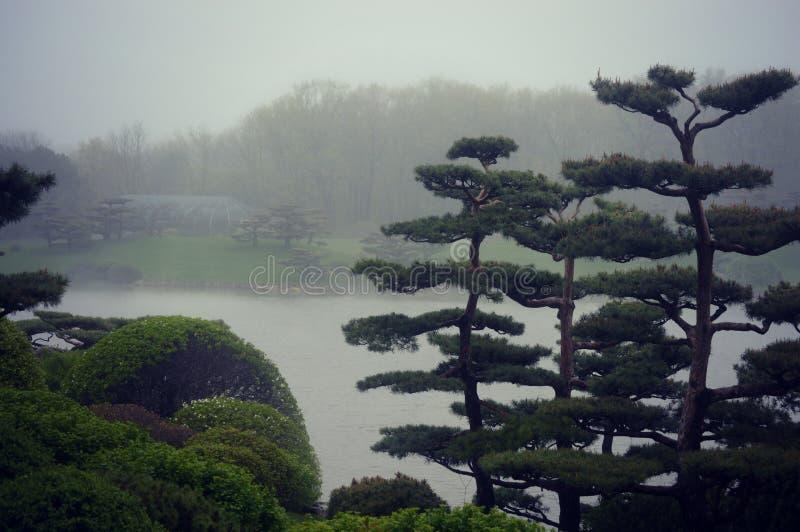Paisagem nevoenta das árvores dos bonsais imagem de stock