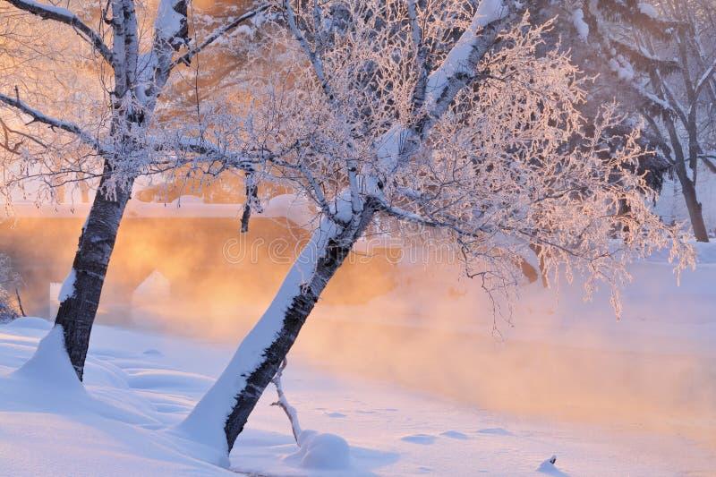 Paisagem nevoenta do inverno foto de stock