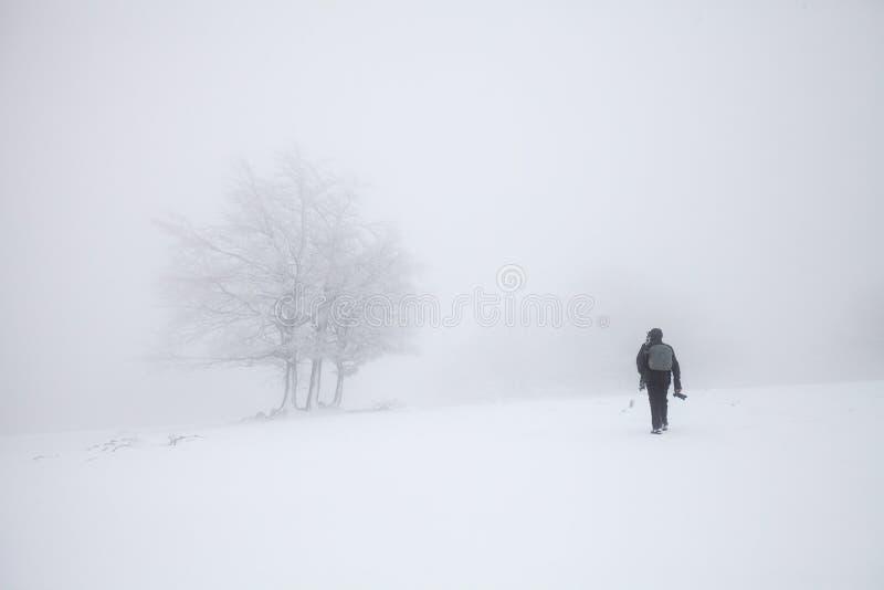 Paisagem nevoenta do inverno na floresta foto de stock royalty free