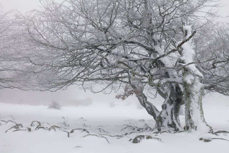Paisagem nevoenta do inverno na floresta imagens de stock