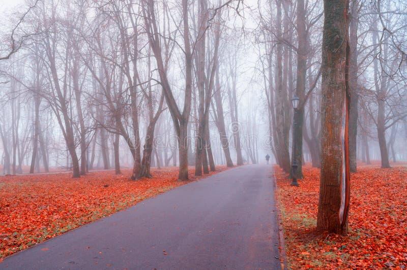 Paisagem nevoenta do outono Aleia do parque do outono com árvores desencapadas e as folhas caídas secas da laranja imagens de stock