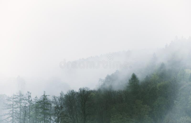 Paisagem nevoenta do vintage, floresta com nuvens fotografia de stock royalty free