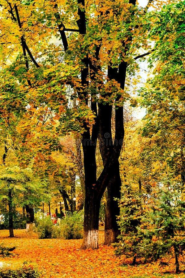 Paisagem no parque da cidade, folhas alaranjadas bonitas do outono, luz natural, vertical fotos de stock royalty free
