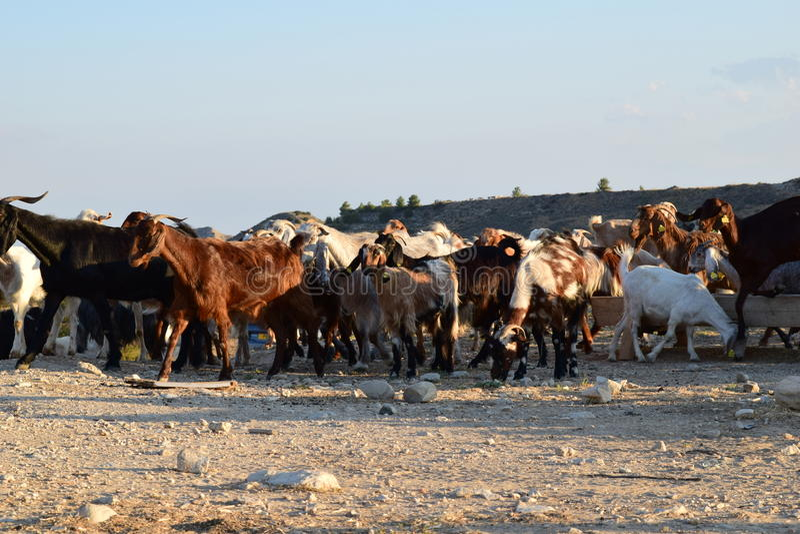 Paisagem norte dos fazendeiros de Chipre imagem de stock
