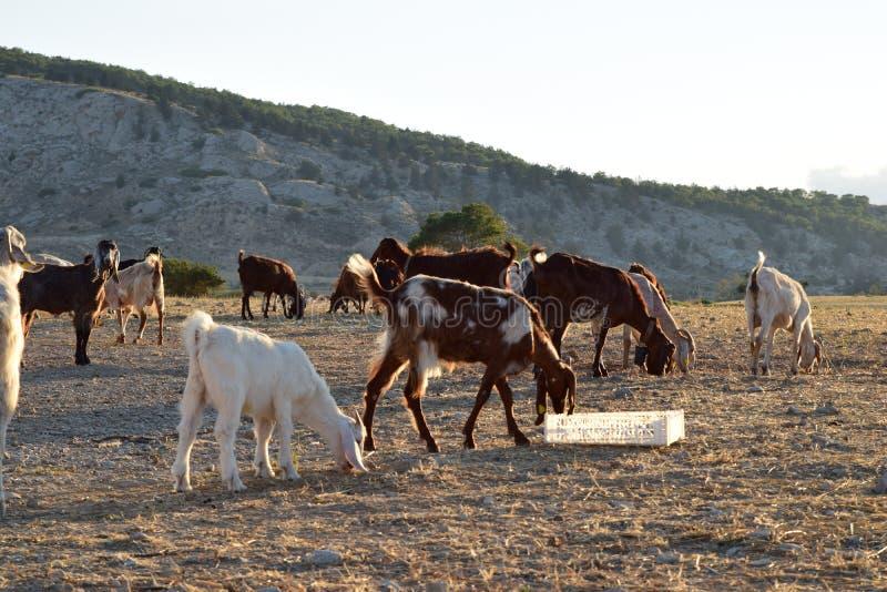 Paisagem norte dos fazendeiros de Chipre imagens de stock royalty free