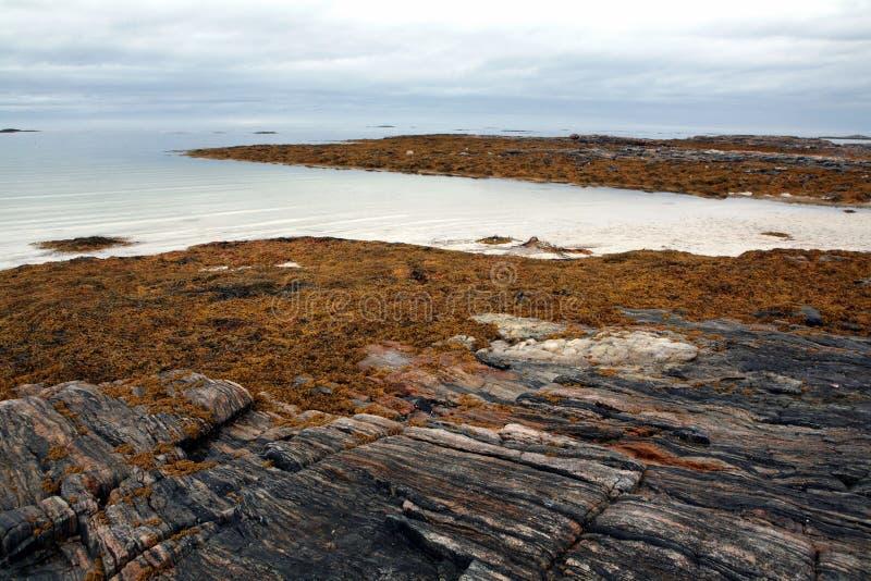 Paisagem norueguesa da praia na luz de nivelamento fotografia de stock