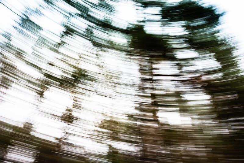 Paisagem obscura do sumário da floresta do pinho do movimento fotografia de stock