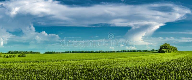 Paisagem panorâmico bonita do campo com um campo do trigo e do milho novos contra o céu com nuvens estranhas fotografia de stock royalty free