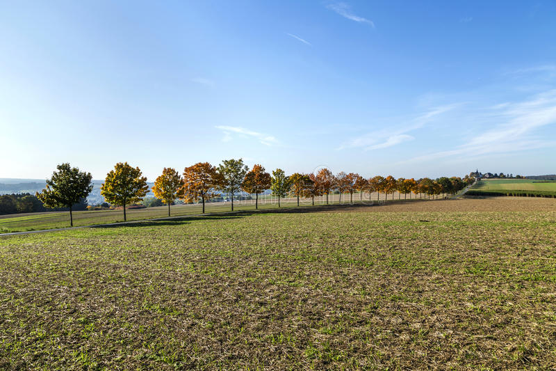Paisagem panorâmico com aleia, campos e floresta imagens de stock