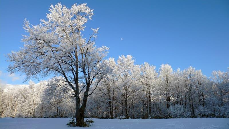 Paisagem panorâmico do inverno foto de stock royalty free