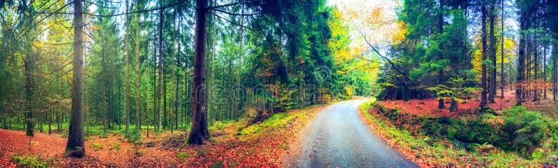 Paisagem panorâmico do outono com estrada de floresta Backgro da natureza da queda imagens de stock royalty free