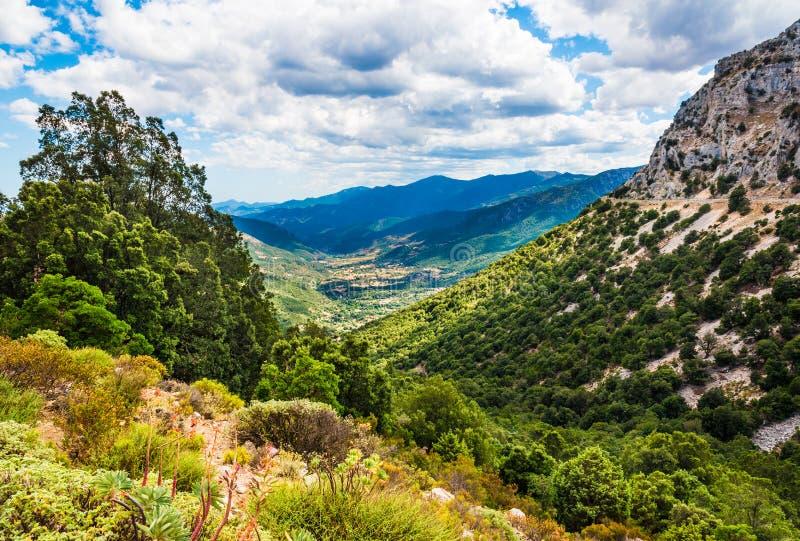 Paisagem panorâmico do verão do vale verde das montanhas de Sardinia, Itália fotos de stock royalty free