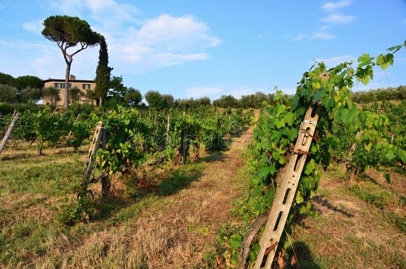 Paisagem perto da cidade histórica de San Gimignano fotos de stock