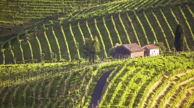 A paisagem pitoresca completamente dos vinhedos em torno da cidade de V imagens de stock royalty free
