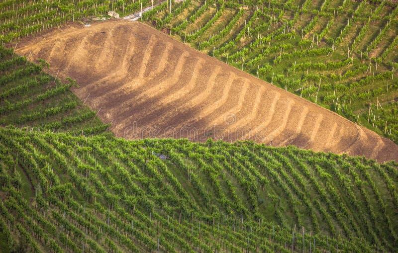 A paisagem pitoresca completamente dos vinhedos em torno da cidade de V fotografia de stock royalty free