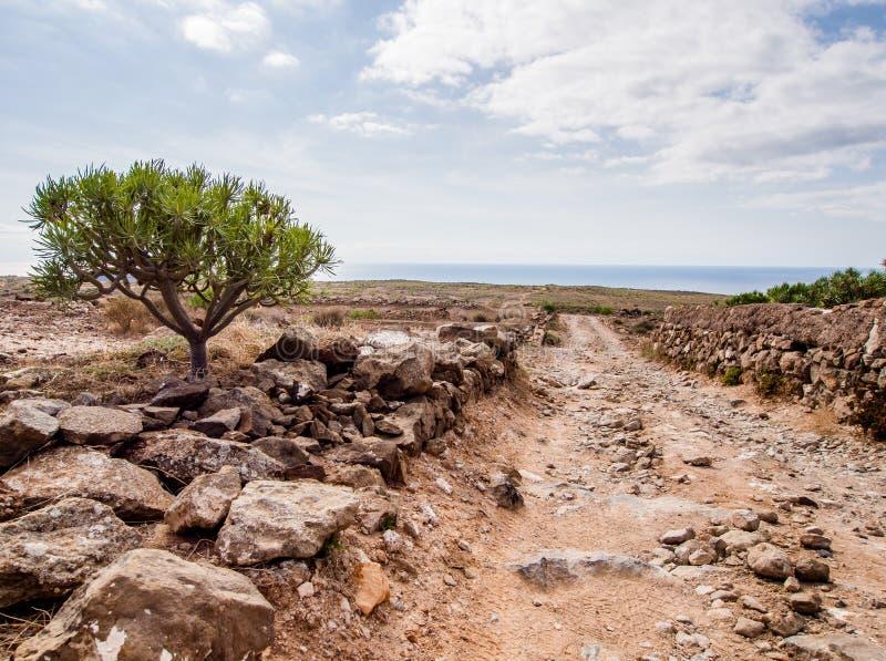 Paisagem pitoresca de Tenerife fotografia de stock