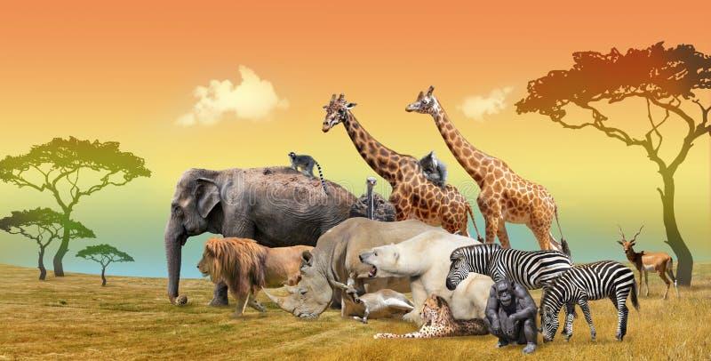 Paisagem pitoresca do grupo do savana e de animais selvagens ilustração royalty free