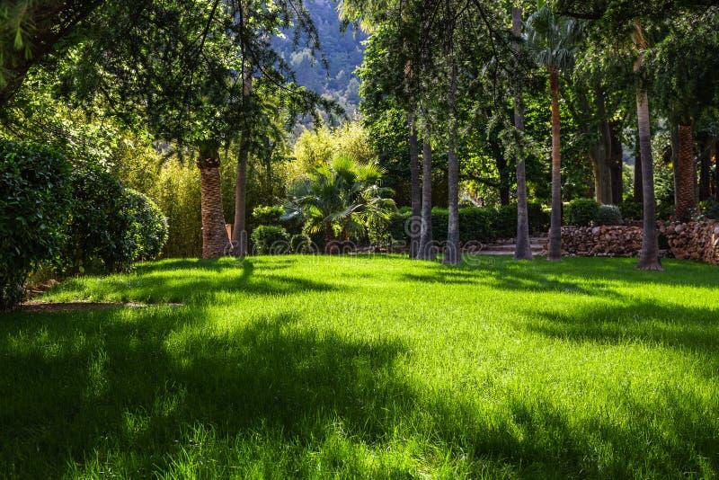 Paisagem pitoresca, gramado verde no jardim tropical imagem de stock royalty free