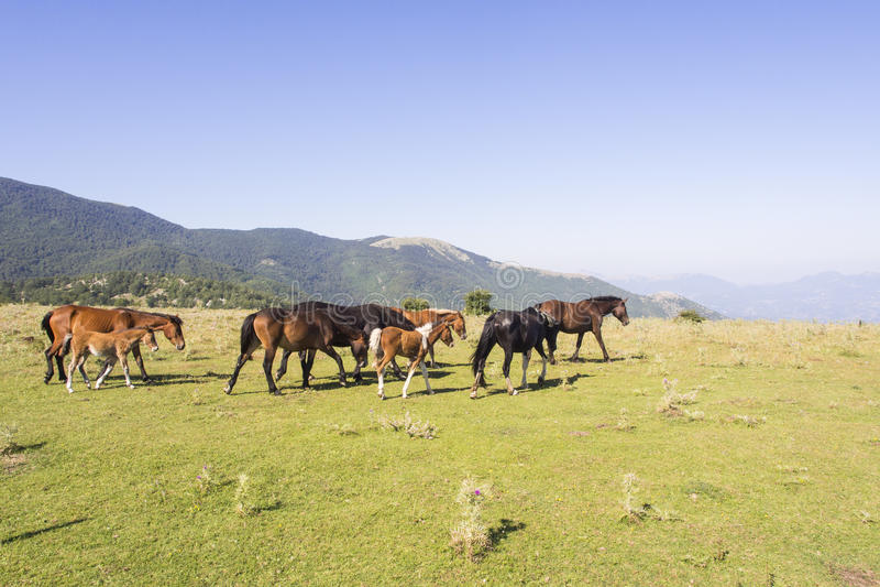 Paisagem Pollino dos cavalos imagens de stock