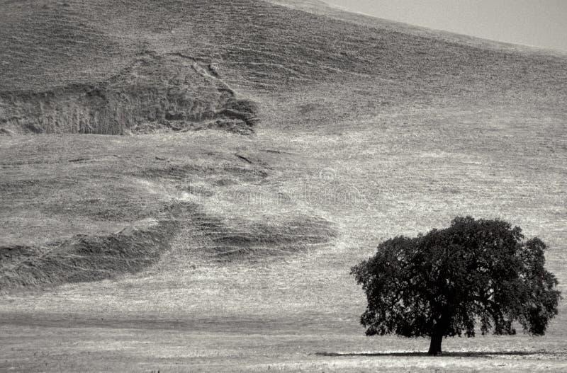 Paisagem preto e branco com árvore imagens de stock