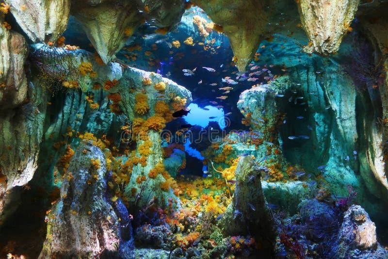 Paisagem profunda subaquática colorida fotos de stock royalty free