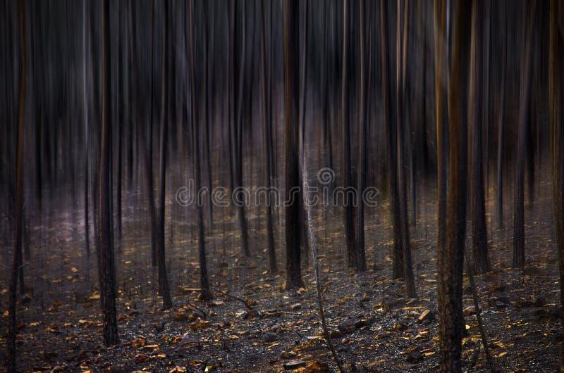 Paisagem queimada fotografia de stock