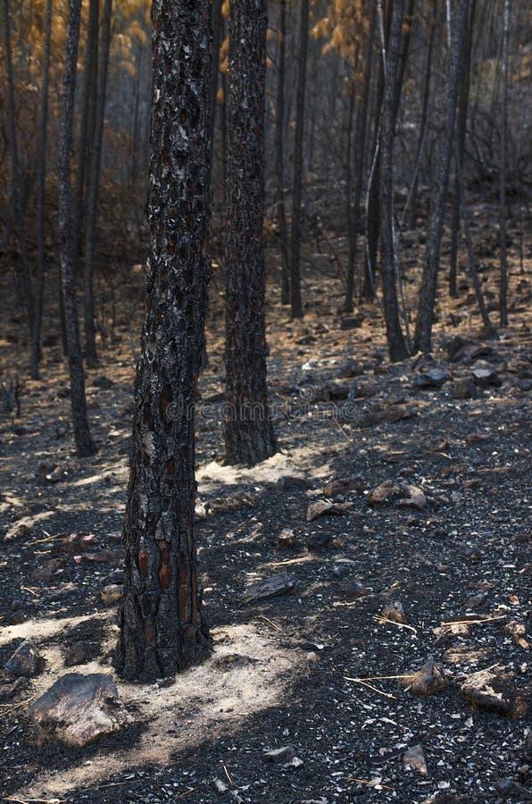 Paisagem queimada foto de stock